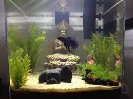 Fun Fish Tank Decorations 17 Best Images About Aquariums On Pinterest Gardens Aquarium