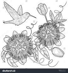 Hummingbird Passiflora Template Postcards Greeting Cards Stock