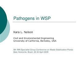 Ppt Pathogens In Wsp Powerpoint Presentation Id 804242