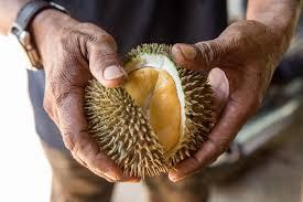 tips pilih durian