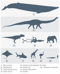 Dinosaur Sizes Comparison Chart Is The Blue Whale The Largest Ever Animal On Our Planet
