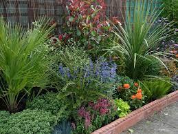 elegant low maintenance garden plants