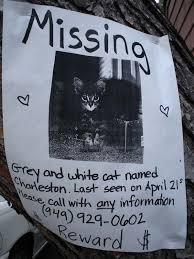 Lost Cat Flyer Samples Of Missing Pet Flyers