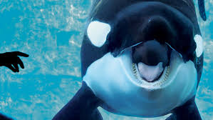 In the Battle at SeaWorld, the Whales Have Won -- NYMag
