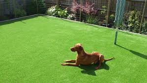 artificial grass for pets. Dog Sitting On Fake Lawn Artificial Grass For Pets S
