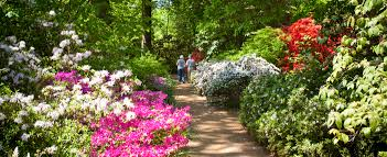 country gardens. 15 Mar English Country Gardens \u2013 Don\u0027t Hold Back On The Dahlias
