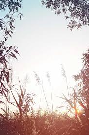 夏関連の写真まとめlineトーク画面の背景画像壁紙に使える写真一覧