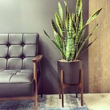 Is the Modernica Case Study Planter Worth          Dans le Lakehouse Case Study Cylinder Planter With Plinth  Small