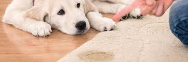 puppy urine on rug
