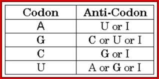Anticodon Chart 8