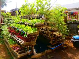 Vegetable Container Garden Picture Gallery Of Backyard  Container Container Garden Ideas Vegetables
