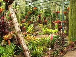 south florida landscaping ideas pictures gardening in south florida bromeliads in the garden