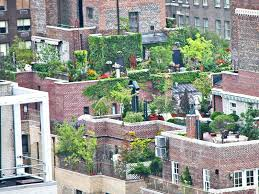 Rooftop Kitchen Garden What To Consider Before Planting A Rooftop Garden