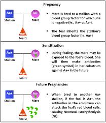 Ni Chart Chart Ni English Cag Center For Animal Genetics