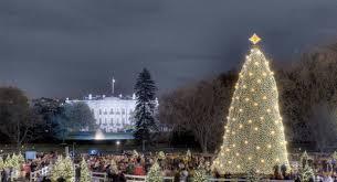 christmas tree lighting ideas. 2008 Christmas Tree Lighting Ideas T
