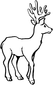 Small Picture Coloring Pages Animals Reindeer Christmas Coloring Pages Deer