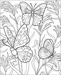 Small Picture Best Butterfly Coloring Pages Printable Images Coloring Page