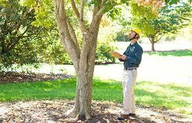 Bartlett Tree Experts Tree Risk Assessments