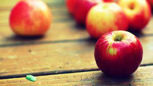 Apple Fruit Wallpapers - Top Free Apple ...