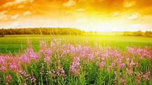 Small Picture Beautiful Flower garden HD Wallpapers Images Pictures Photos