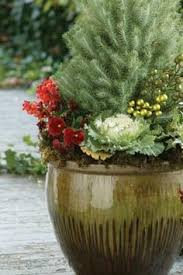 157 Best Winter Containers Images On Pinterest  December Container Garden Ideas For Winter