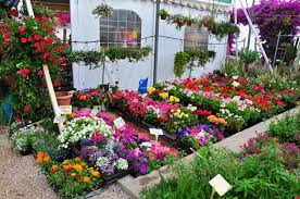 gardenia specializes in plants for small gardens and patios as well as plants which are happy both indoors and out the mild spanish climate means that