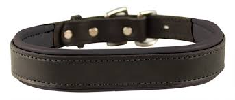 com perri s padded leather dog collars in metallic and bold non metallic colors sports outdoors