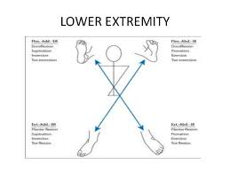 Pnf Patterns Lower Extremity