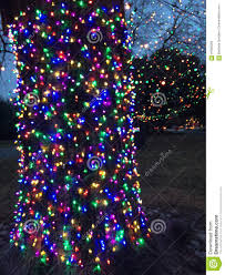 How To Decorate A Tree Trunk With Christmas Lights Christmas Tree Lights Stock Photo Image Of Trunk Lights