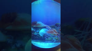 our fake jellyfish tank d