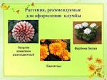Цветы на школьной клумбе 2