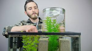 Fish Tank Make A Vacuum Suspended Fish Tank Youtube