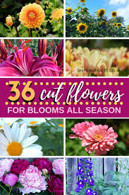 the 36 best cut flowers to feed your