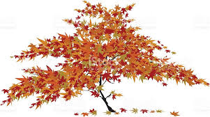 Image result for maple tree clipart