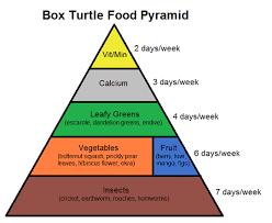 animal food pyramid.  Food In Animal Food Pyramid A