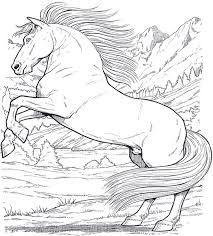 Small Picture 35 best Favorite Horse Colouring Pages images on Pinterest Horse
