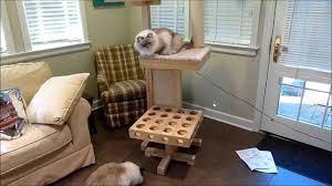 cool cat tree furniture. Ragdoll Cats Review Cat Power Tower Designer Tree For - ねこ ラグドール Floppycats YouTube Cool Furniture