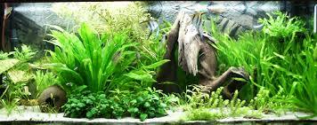 Aquarium Backgrounds 3 Methods To Own Your Unique Fish Tank Backgrounds