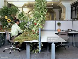 next office desk. office worker at desk covered in plants while next has small potted plant : stock