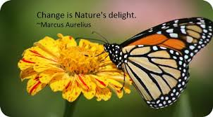 Image result for images representing transition and change