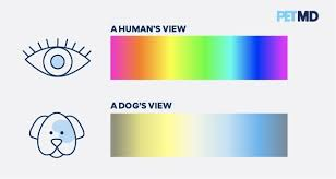 are dogs color blind exles of dog