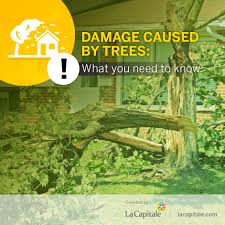 Damage Caused by Trees: What You Need to Know | La Capitale
