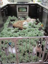 tear resistant dog bed.  Dog Homemade Indestructible Dog Bed In Tear Resistant R