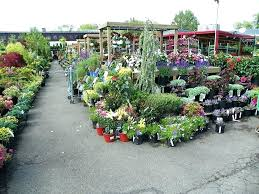 home depot plants garden center home design game tips home depot plants nyc home designer suite tutorial