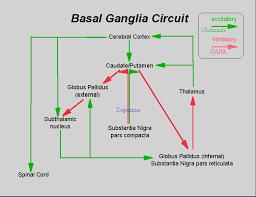 part of extrapyramidal motor system