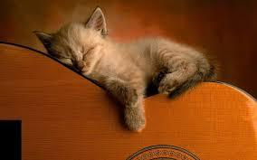 kitten wallpaper screenshot 6