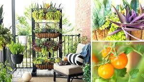 small patio vegetable garden ideas apartment balcony garden ideas small space balcony garden balcony garden small small patio vegetable garden ideas