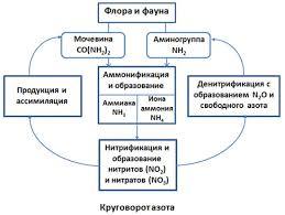 Круговорот азота в природе и биосфере Круговорот азота