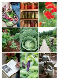 Kitchen Garden Preserves The Not So Little Vegetable Garden That Could New England Today