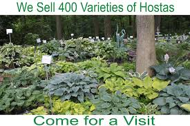 Small Picture The Hosta Hideway of York Springs Pennsylvania